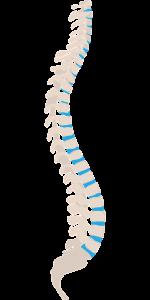 spine-1925870_1280